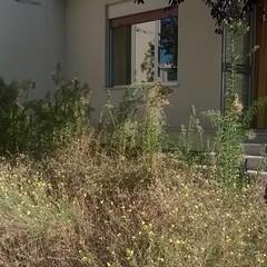 Liceo Oriani erba