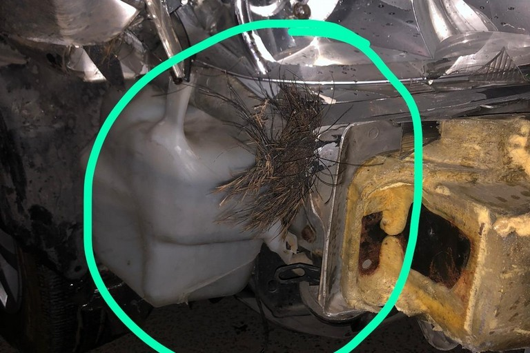 Auto danneggiata da cinghiale