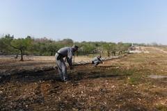Taglia 85 querce nel Parco dell'Alta Murgia, denunciato