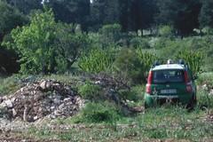 Alberi di ciliegi al posto del pascolo in zona protetta, una denuncia