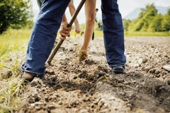 Crisi di governo, le preoccupazioni di Cia Puglia: «Tutto azzerato e l'agricoltura muore»