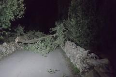 Assalto ad una villa, chiodi a tre punte e alberi tagliati per compiere il furto