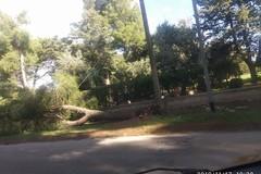 Forte vento, alberi spezzati e interventi dei vigili del fuoco