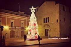 """Un albero di Natale al centro della Piazza, il """"Grazie"""" di Palazzo di Città a chi lo ha fatto allestire"""
