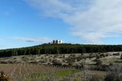 Il Consorzio Terre di Castel del Monte si apre alle imprese