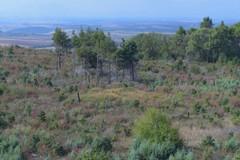 Lotta agli incendi boschivi, il Parco dell'Alta Murgia ha finalmente il suo piano di prevenzione