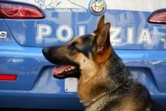 Beccato dal cane poliziotto con la droga nelle mutande, nei guai 20enne incensurato