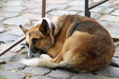 Contrasto al randagismo, in Puglia veterinario gratis per chi adotta cani e gatti