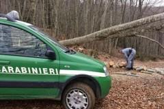 Incendi boschivi, territorio monitorato da 60 pattuglie dei Carabinieri forestali