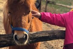 Le attività di pony e cavalli del circolo ippico di Corato al tempo del Covid19