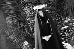 Il Culto e la devozione Mariana in Puglia, un incontro a Vivere In