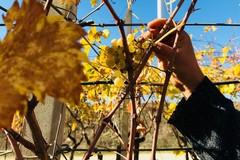 """""""InPuglia365 – Sapori e colori d'autunno"""": un altro week end ricco di attività"""