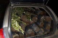 In trasferta a rubare 60 piante d'ulivo. Denunciato dai Carabinieri un 62enne