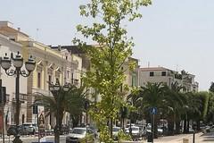 In Piazza Cesare Battisti due alberi dedicati a Luisa Piccarreta