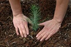 Festa dell'albero, sette nuove piante nel quartiere Belvedere