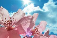 Maggio in fiore: fiori, frutta e verdura nella dieta mediterranea
