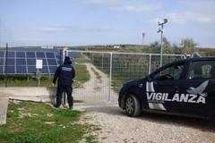 Bande organizzate assaltano campi fotovoltaici