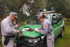 A caccia con mezzi non consentiti, una denuncia