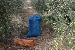 Le (poche) olive vanno a ruba, intensificati i controlli dei Carabinieri