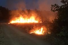 Gli incendi devastano la Murgia, Confagricoltura scrive al presidente Emiliano