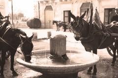 Scoprire il patrimonio culturale locale attraverso il dialetto di Corato