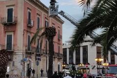 Ramo di palma collassa al suolo, pericolo su Corso Mazzini