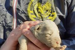 Sette cuccioli di cane abbandonati in un cartone, salvati dalle GADIT