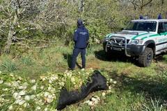 Macabro ritrovamento sulle Murge: carcassa mucca scaricata nei campi