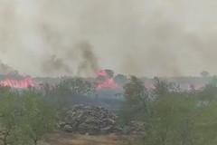Fiamme nelle campagne di Corato, a lavoro diverse squadre di pompieri