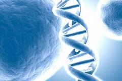 Malattie e tumori rari, due giorni di convegni sul tema