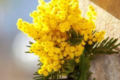 L'8 marzo, non solo mimose