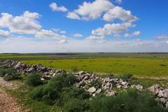 Parco dell'Alta Murgia riparta dal rilancio della sua natura