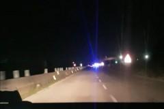 Auto travolgono cinghiali sulla ex statale 98