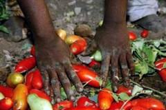 Agricoltura, nel 2020 perse 30mila giornate di lavoro nella sola Puglia