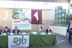Istituzioni e olivicoltori al tavolo: a Corato l'incontro nazionale per il rilancio del comparto