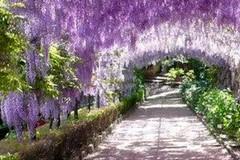 """L'UTE Edith Stein discute online di """"Ville e giardini del Rinascimento"""""""