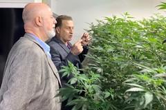 Fitocannabinoidi, il progetto made in Corato si sposta in USA: «Troppi ostacoli»