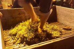 """I profumi d'autunno sui """"Percorsi del vino"""""""