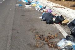 Rifiuti abbandonati sulla Corato - Bisceglie: «Come mai non intervengono le autorità»?