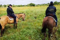 Guardie a cavallo nel Parco, sentinelle a tutela dell'ambiente