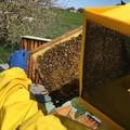 """""""Alta Murgia: un Parco per api e farfalle """", al via il monitoraggio nel Parco"""