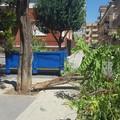 Il verde crolla: un albero si spezza in Piazza Italia