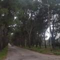 «Apettiamo la prossima tragedia?», lettore denuncia il degrado degli alberi di Bracco