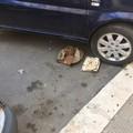 Un tesoro nascosto sotto la ruota di un'automobile