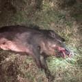 Danni da fauna selvatica, il consiglio regionale approva la legge