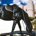 """Cavalieri di tutta Italia a Corato per il raduno nazionale  """"Natura a cavallo """""""