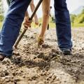 DL Cura Italia, possibile uscire per la cura dei terreni agricoli. Ma occorre che il decreto diventi legge