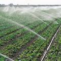 Siccità, in arrivo ulteriori agevolazioni per agricoltori