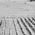 Gelata di febbraio, Marmo: «ritardo nella richiesta dello stato di calamità»