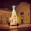 """Un albero di Natale al centro della Piazza, il  """"Grazie """" di Palazzo di Città a chi lo ha fatto allestire"""